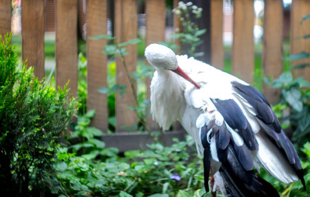a beautiful stork on the background of a fence with a tree Banco de Imagens