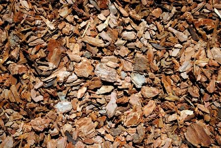 bark pinewood background photo