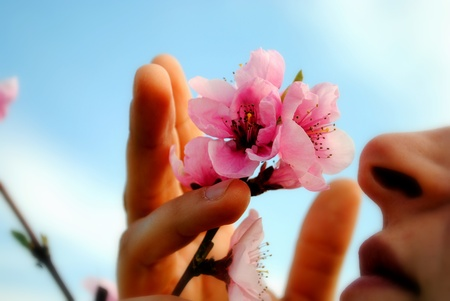 smells: woman smells a peach flower from the tree Stock Photo
