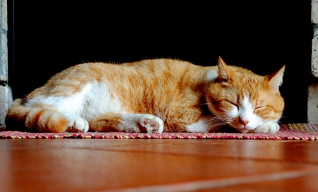 orange and white cat sleeping over red carpet