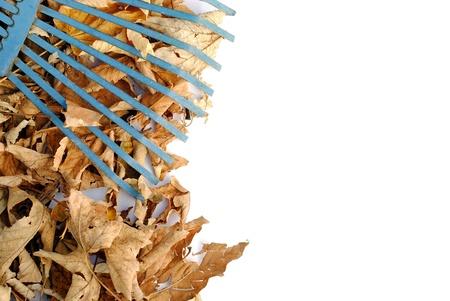 rastrello giallo blu sopra foglie secche, con spazio per il testo