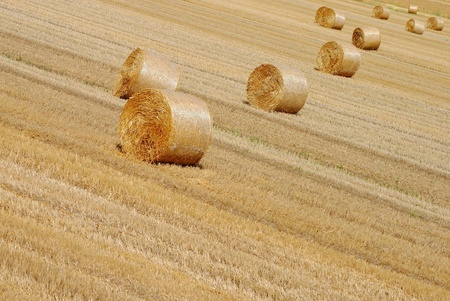 background of bales of hay in farmlands photo