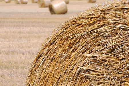 bale of hay in the countryside of wheat field photo