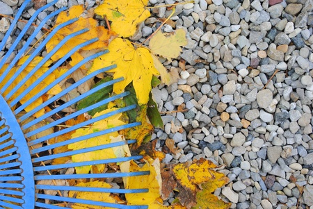 blue rake over yellow dried leaves, with space for your text Stock Photo