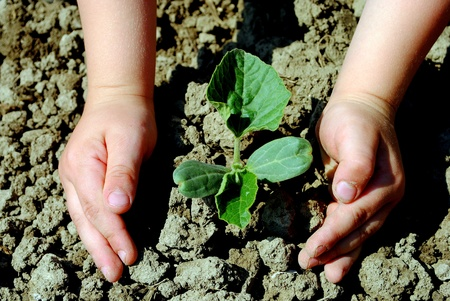 Kid hands plant a seedling in the garden Stock Photo