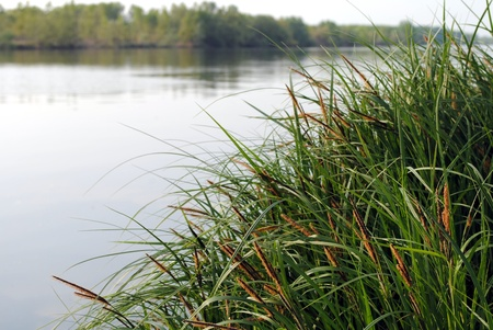 erba verde con un fiume su sfondo Archivio Fotografico