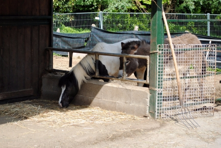 horse and mule in a cowshed, concept of captivity Stock Photo