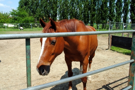brown horse in a cowshed, concept of captivity Stock Photo - 13605565
