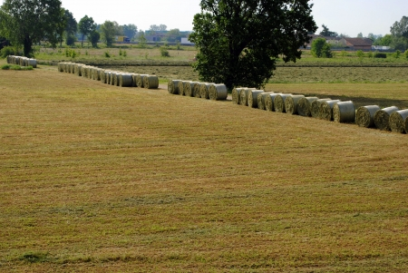farmland landscape with bales of hay photo