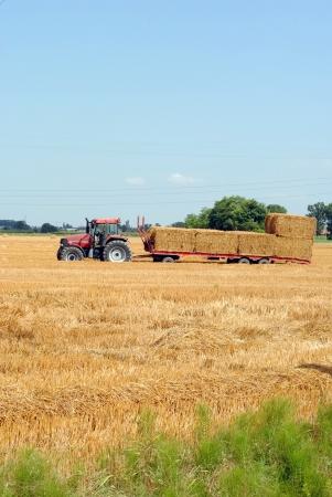 dryed: tractors load bales of hay in farmlands