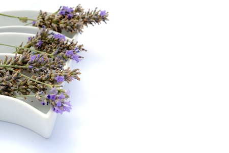 Lavander flowers into shaped dishes, on white background soft shadows