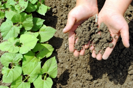 kid hands with soil in the garden Stock Photo