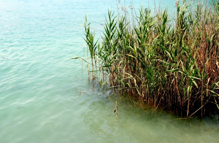 limpid: green grass close to a limpid lake