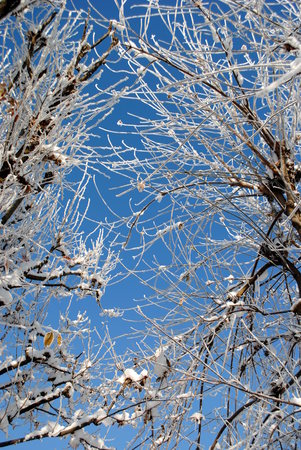 frozen branches with blue sky on background Stock Photo