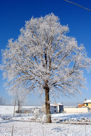 big tree with frozen branches blue sky on background Stock Photo