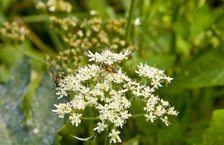 nectar: Nectar
