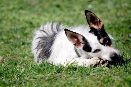 quadruped: Dog portrait