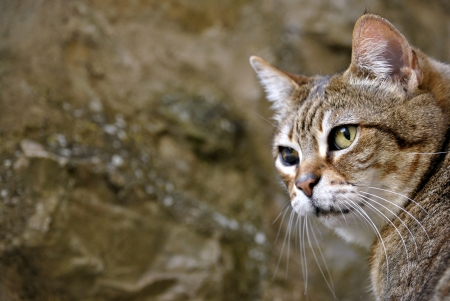 catlike: Cat portrait Stock Photo