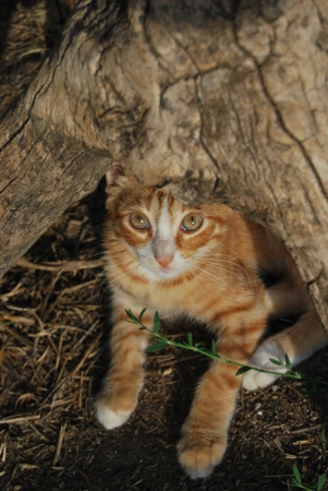 catlike: Young cat portrait