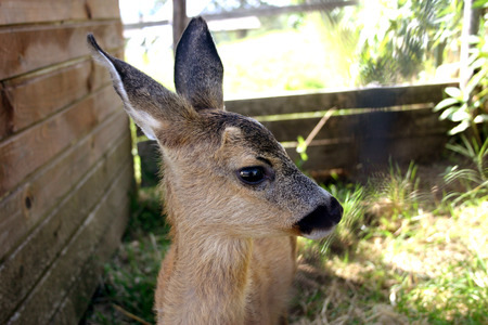 quadruped: Young deer Stock Photo