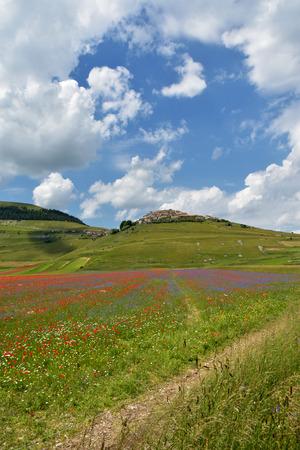 castelluccio: Valley of Castelluccio, Umbria, Italy