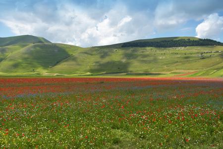 umbria: Valley of Castelluccio, Umbria, Italy