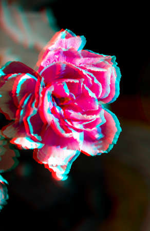 Flower carnation baby pink 3D