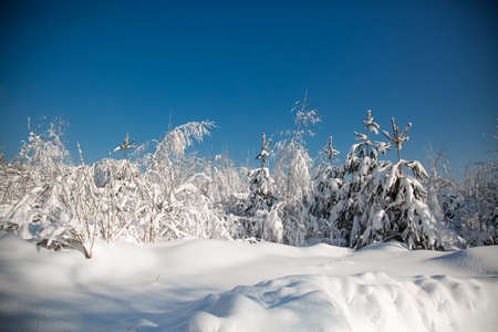 Cold snowy winter in the forest