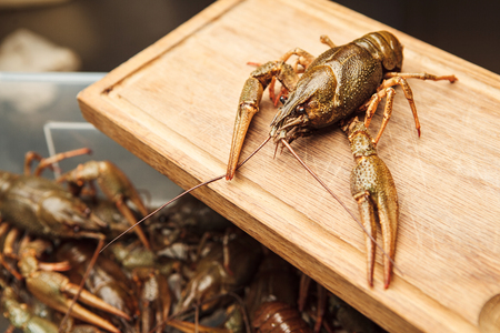 Fresh crawfish on wooden board,green lobster ready to be boiled, healthy crawdad closeup view in green shell with background with lots of crayfish
