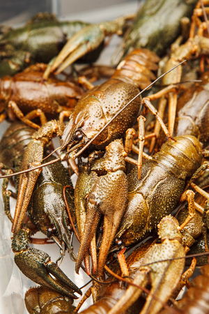 Fresh crawfish background, crayfish seafood lunch, gourmet dish