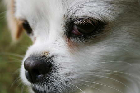 portrait of white dog Stock Photo