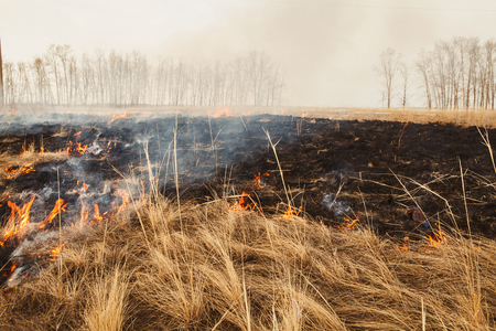 a quick fire spring dry grass. the danger for the forest and future harvest. rules of environmental protection. Stock Photo