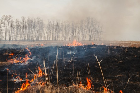 a quick fire spring dry grass. the danger for the forest and future harvest. Stock Photo