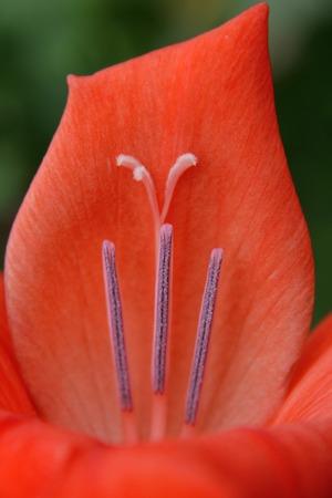 pistil and stamen on the petal.
