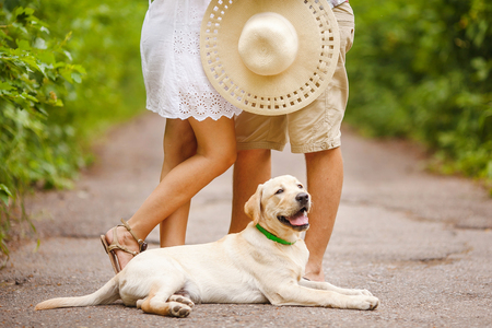 beautiful puppy labrador near couple. the element of a happy family unit.