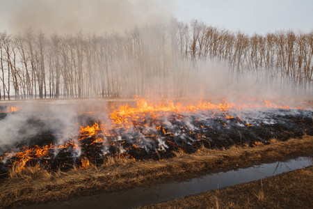 the flames of the fire, rapidly running to the trees. inflammability of the grass in spring and autumn. danger and warning. security measures and prevention. Stock Photo