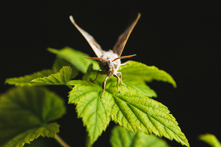 Beautiful night moth sits on green leaf. Stock fotó
