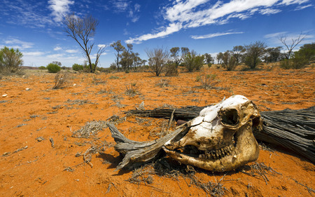 Dodelijke Desert Stockfoto