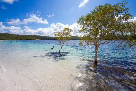 Fraser island lake Mckenzie Stock Photo