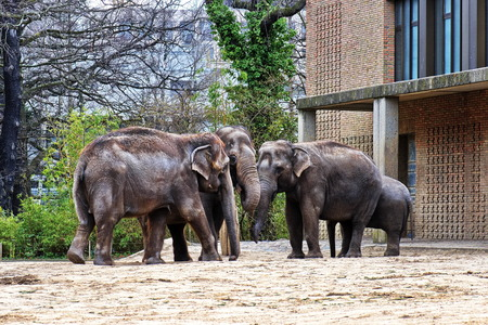 Elephant Family, Maasai Mara Nature Reserve, Kenya, Africa