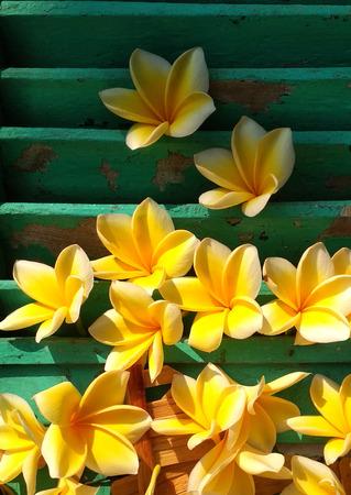 composition of yellow kemboja Stock Photo