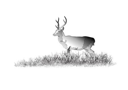 Deer in the savanna