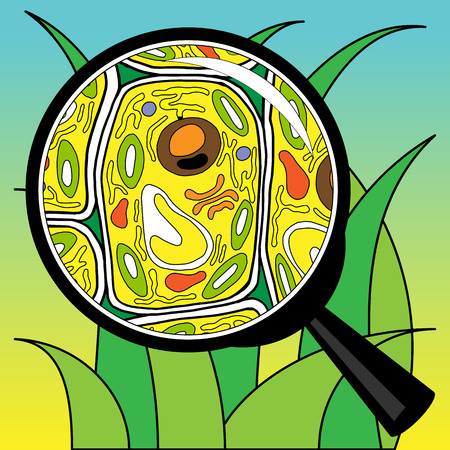 illustration biological cells grass looking through a magnifier
