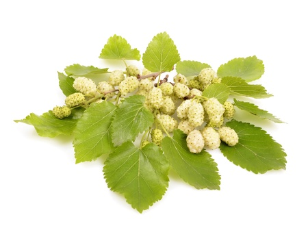 white mulberry on a white background close-up