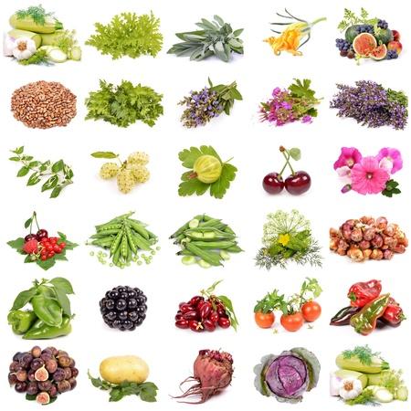 cebollas: gran colecci�n de frutas, bayas verduras, agricultura org�nica, aislado en un fondo blanco