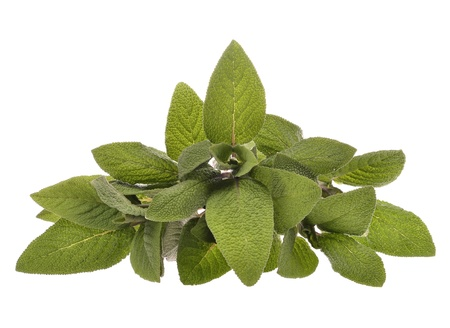 top view plant: Bunch of sage leaves isolated on white