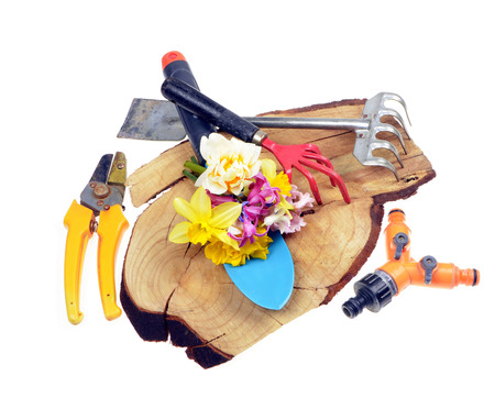 replant: Gardening tools,flowers on old wooden  stand,isolated white background