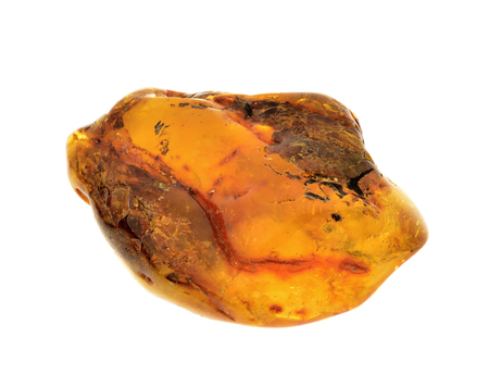 calcification: piece of baltic amber isolated on white background