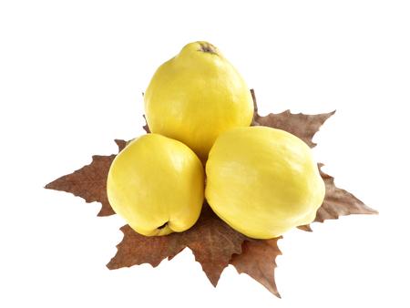 membrillo: Tres membrillos maduros en el otoño de hojas aisladas sobre fondo blanco Foto de archivo