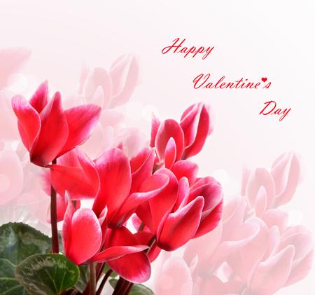 Happy Valentines Day celebration greeting card, cyclamen with stylish text Stock Photo